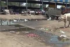 bad arrangement of cleanliness in vegetable market piles