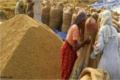 129 lakh tonnes of wheat arrived in punjab