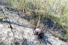 fire in sugarcane crop