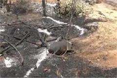 dabangs set fire to dalit cattle animals accused of burning alive girl