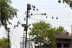 bats are big reasons for power cuts kamal nath
