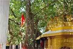 maa chintapurni temple trust has 195 kg gold