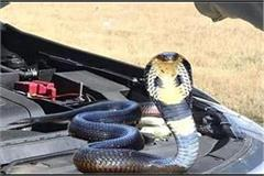 be careful in the rain snakes can be hidden in your car