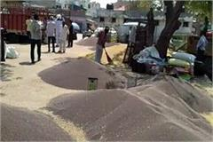 police deployed for procurement of mustard in the mandis