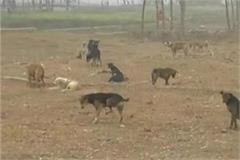 dog eating bone meat factories
