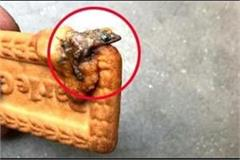 the lizard in the parle g biscuit
