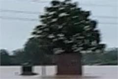 rain in patiala
