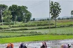 punjab farmers change trend