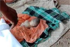 found dead body of newborn baby