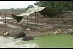 prayagraj painful death of 35 cows in gaushala