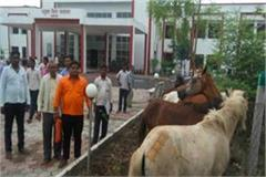 farmer protest in collectorate burhanpur