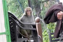 monkey problem