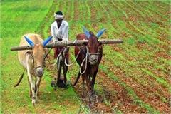 grew the natural cultivation of 17 thousand farmers of himachal trend