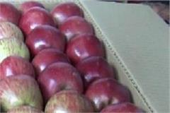 the world best apples reached the market