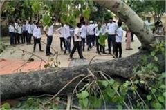tree collapses in school premises
