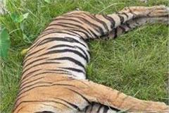 bighin s dead body found in lakhimpur kheri in uttar pradesh