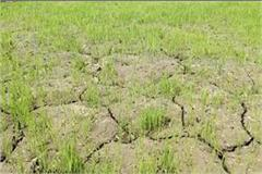 farmers written demand letter to cm for 10 hours daily of electricity supply