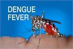 dengue havoc in mp