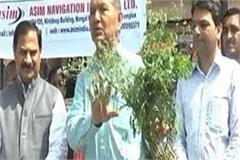 people will get rid of poisonous parthenium grass
