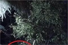 leopard panic in shimla