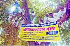 resentment among farmers now picket will run on trees