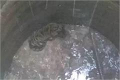 cub fell in well forest department rescued
