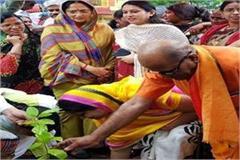 do plantation on rakhi amrita singh