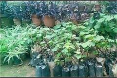 22 crore plants will be planted in uran on  kranti divas