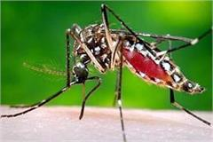 dengue in mandi