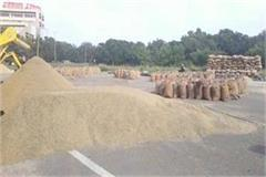 haryana mandi board s negligence farmers have to keep cumin crop in the open