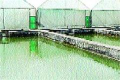 mahasheer fish breeding farm running in government area
