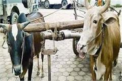 traffic police cut challan of bullock cart