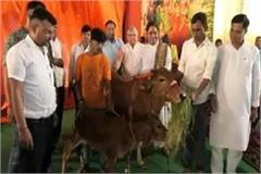 madhya pradesh s first cows hospital to open in khandwa