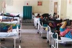 scrub typhus fever spreading in bilaspur