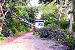 roads blocked due to trees due to storm