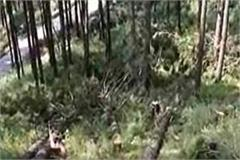 forest mafia active in himachal