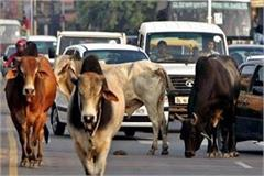 cows are left roads owners will be imprisoned banning sale grass on roads