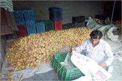 rajgarh peaches crops farmers losses