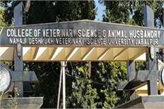 veterinary doctors warning fast death government kept this demand