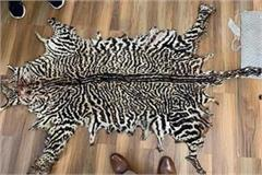 two hunters arrested with rare king leopard skins