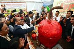 inauguration of apple festival in shimla