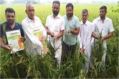 bad paddy seeds given to farmers in the name of hybrid seed