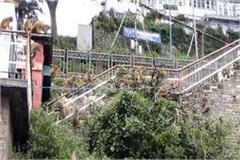 shimla monkey army rid