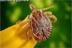 death of woman by scrub typhus