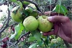 apple gardner