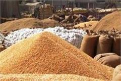 fci boycott in all mandis of punjab from today