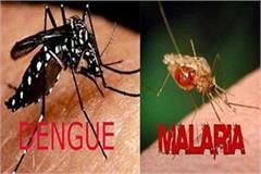 dengue and malaria knock between corona antillar activity intensifies