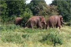 a herd of elephants attacked a farmer guarding the farm