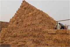 biomass power plants in kurukshetra will generate crores