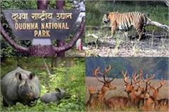 good news dudhwa tiger reserve will again open for tourists from november 1